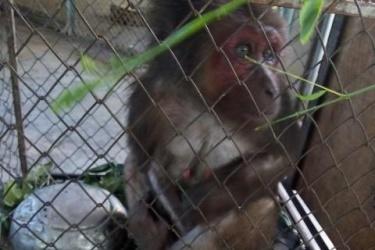 Người dân tự nguyện giao nộp động vật hoang dã